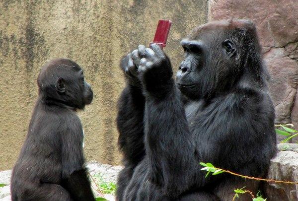 Gorilla-ds-08-09-2010