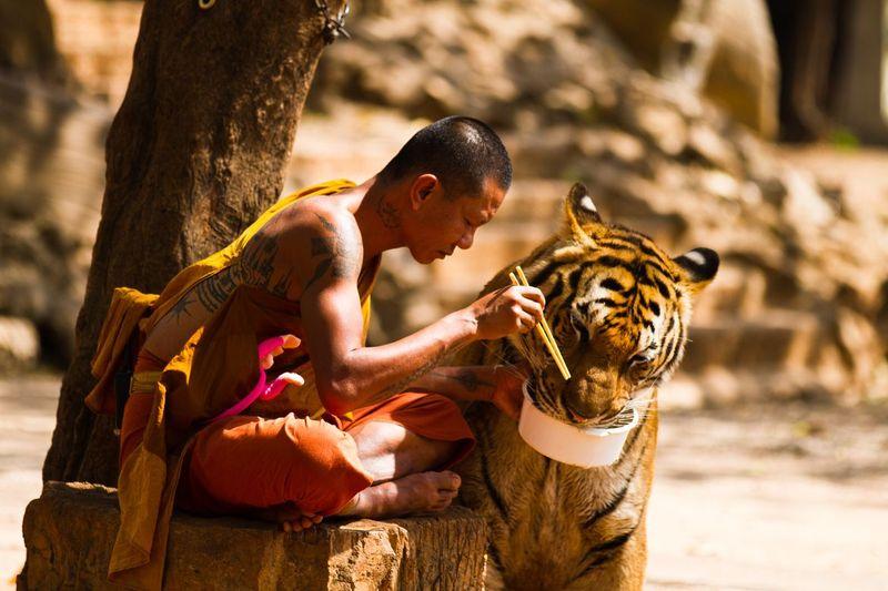 Monk&Tiger01
