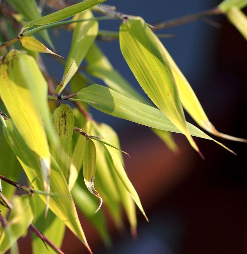 Bamboo02a