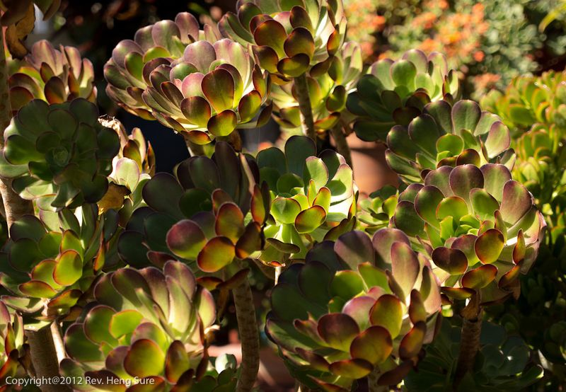 BBM-Garden-Succulents01