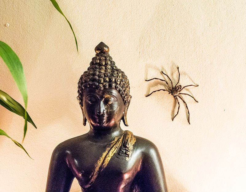 Buddha-and-Spider_001