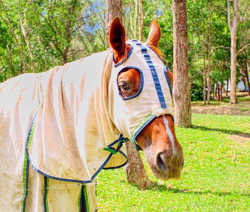 Horse.03
