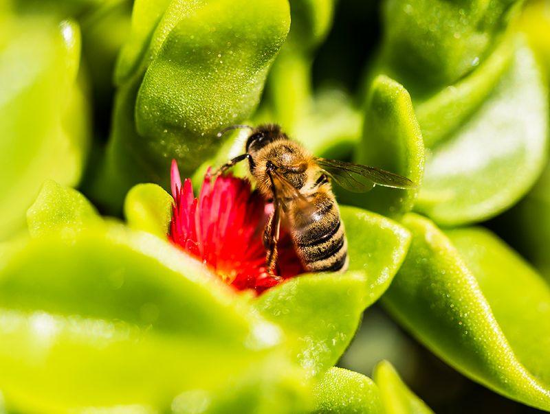 Bee-on-Flower.01