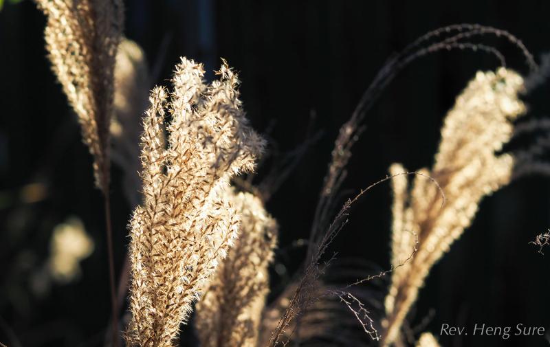White-Grass.04