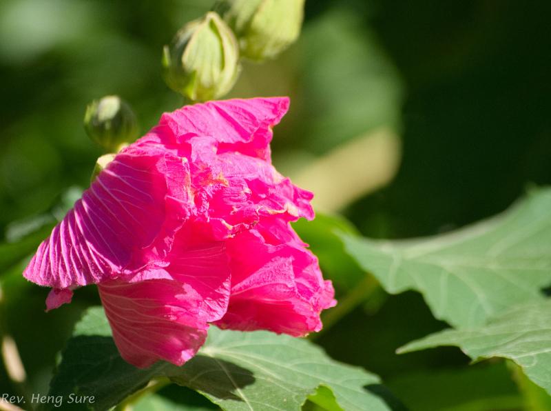 Flower.07